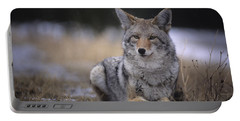 Coyote Resting In Winter Grass, Snowing Portable Battery Charger