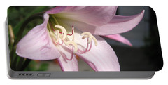 Portable Battery Charger featuring the photograph Crinum Lily Named Powellii by J McCombie