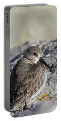 Dunlin Portable Battery Charger