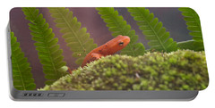 Eastern Newt 4 Portable Battery Charger