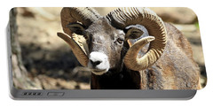 European Big Horn - Mouflon Ram Portable Battery Charger