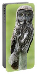 Great Grey Owl, Water Valley, Alberta Portable Battery Charger
