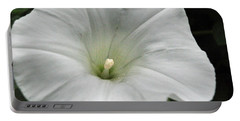 Portable Battery Charger featuring the photograph Hedge Morning Glory by Tikvah's Hope