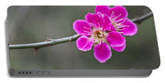 Japanese Flowering Apricot. Portable Battery Charger