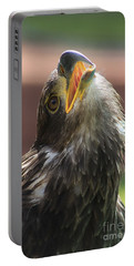 Portable Battery Charger featuring the photograph Juvenile Bald Eagle by Alyce Taylor