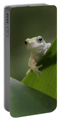 Juvenile Grey Treefrog Portable Battery Charger by Daniel Reed
