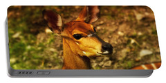 Lesser Kudu Portable Battery Charger