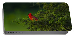 Male Cardinal In Pine Tree Portable Battery Charger