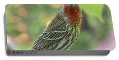 Portable Battery Charger featuring the photograph Male House Finch by Debbie Portwood