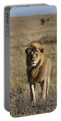 Male Lion's Gaze Portable Battery Charger by Darcy Michaelchuk