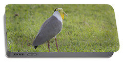 Masked Lapwing Portable Battery Charger by Douglas Barnard