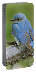 Mountain Bluebird Portable Battery Charger