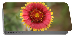 Portable Battery Charger featuring the photograph Painted Blanket Flower by Donna  Smith