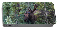 Portable Battery Charger featuring the photograph Peeking Through The Spruce by Doug Lloyd