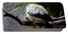 Portable Battery Charger featuring the photograph Pied Imperial Pigeon by Davandra Cribbie