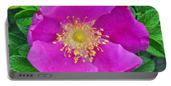 Portable Battery Charger featuring the photograph Pink Portulaca by Tikvah's Hope