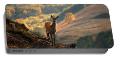 Portable Battery Charger featuring the photograph Red Deer Calf by Gavin Macrae