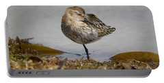 Sleeping Dunlin Portable Battery Charger