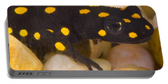 Strauchs Spotted Newt Portable Battery Charger