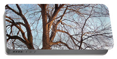 Portable Battery Charger featuring the photograph Winter Sunlight On Tree  by Chalet Roome-Rigdon
