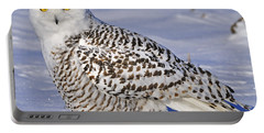 Young Snowy Owl Portable Battery Charger