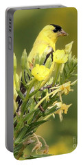 Portable Battery Charger featuring the photograph  Goldfinch by Debbie Stahre