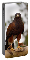 Harris's Hawk Portable Battery Charger