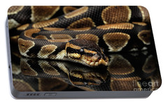 Ball Or Royal Python Snake On Isolated Black Background Portable Battery Charger by Sergey Taran