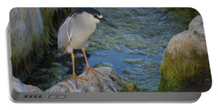 Black Crowned Night Heron Portable Battery Charger by Greg Graham