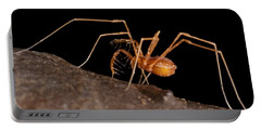 Cave Harvestman Portable Battery Charger