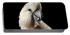 Closeup Head Of Beautiful Moluccan Cockatoo, Pink Salmon-crested Parrot Isolated On Black Background Portable Battery Charger