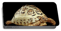 Closeup Leopard Tortoise Albino,stigmochelys Pardalis Turtle With White Shell On Isolated Black Back Portable Battery Charger