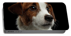 Closeup Portrait Of Jack Russell Terrier Dog On Black Portable Battery Charger