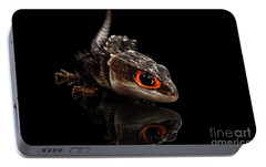 Closeup Red-eyed Crocodile Skink, Tribolonotus Gracilis, Isolated On Black Background Portable Battery Charger by Sergey Taran