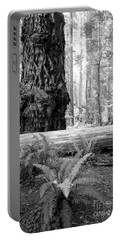 Coastal Redwoods  Portable Battery Charger
