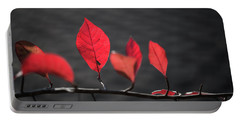 Colorful Tree Leaves Changing Color For Auyumn,fall Season In Oc Portable Battery Charger