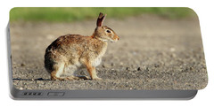Cottontail Rabbit Stony Brook New York Portable Battery Charger