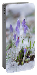 Early Spring Crocus Portable Battery Charger