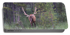 Bull Elk Rocky Mountain Np Co Portable Battery Charger