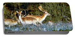Fallow Deer In England Portable Battery Charger