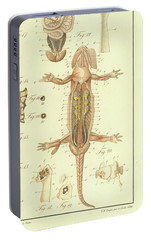 Portable Battery Charger featuring the drawing Fire Salamander Anatomy by Christian Leopold Mueller