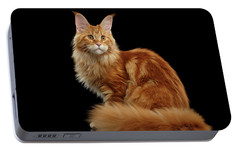 Ginger Maine Coon Cat Isolated On Black Background Portable Battery Charger by Sergey Taran