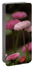 Portable Battery Charger featuring the photograph Habanera English Daisy by Brenda Jacobs
