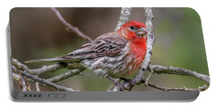 Male House Finch Portable Battery Charger