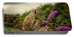 Meerkat Lookout Portable Battery Charger