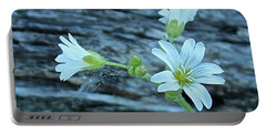 Portable Battery Charger featuring the photograph Mouse-eared Chickweed by Ann E Robson