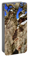 Old Willow Tree Portable Battery Charger by Stephanie Moore