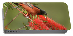 Orchard Oriole  Portable Battery Charger by Alan Lenk