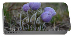 Pasque Flowers  Portable Battery Charger