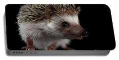 Prickly Hedgehog Isolated On Black Background Portable Battery Charger by Sergey Taran